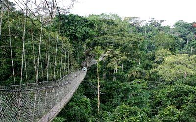 Okomu-National-Park Benin
