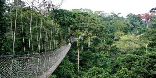 Image result for OKOMU FOREST RESERVE